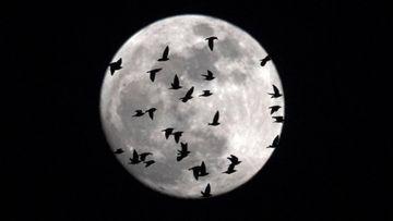 Eclipse lunar 2020: horario, cómo y dónde verlo hoy en España