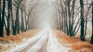 Ante condiciones climáticas exigentes, usa neumáticos de invierno