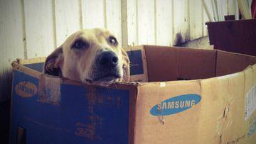 Las mascotas a veces disfrutan hasta con cajas