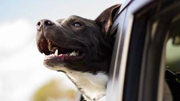 Viajar con las mascotas es una experiencia diferente
