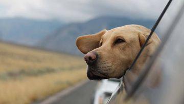 ¿Viajas con mascotas? Estos objetos harán que sea más cómodo y seguro